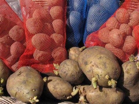 How to Grow Potatoes   how tos   DIY