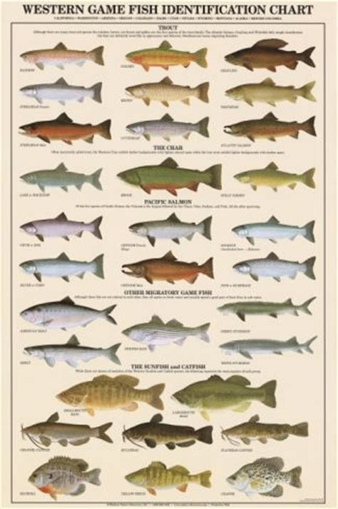 western game fish identification poster freshwater fish