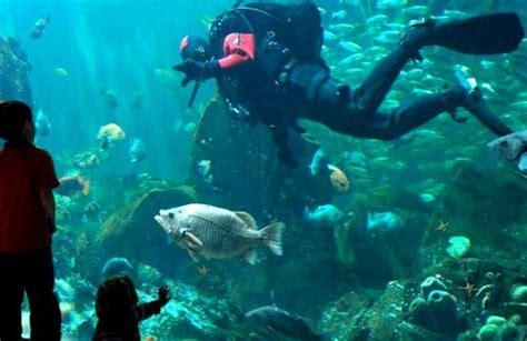 aquarium de adresse aquarium de vancouver vancouver canada prix forfait