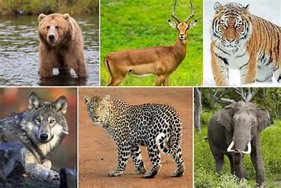 Animals Animal Survive Diet Wild Human Mix