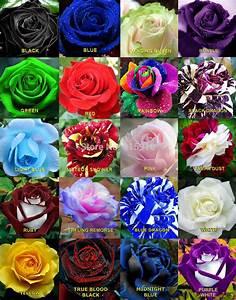 Online Buy Wholesale rainbow rose from China rainbow rose ...