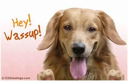 Welcome Hello Card Dog Hey Animal Wassup