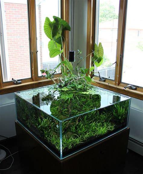 un aquarium quot low tech quot ouvert filtr 233 par les plantes blognature fr