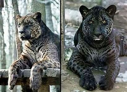 Hybrids Animal Exist Crazy Actually