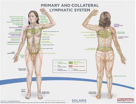 diagram   lymph nodes lymph nodes  body diagram
