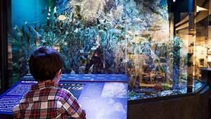 Marine Life in the Putnam Family Gallery | Harvard Museum ...