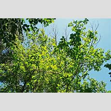 Bright Green Foliage Free Stock Photo  Public Domain Pictures