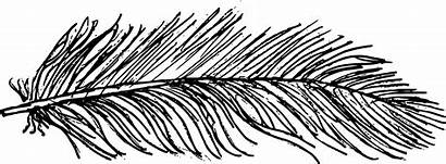 Feather Drawing Transparent Onlygfx Px 2949 1085