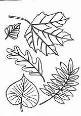 Coloring Leaf Autumn Different Fall Pages Clipart Basswood Abstract Aurumn Leaves Printable Tree Colornimbus Cartoon Clipground sketch template