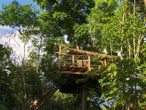 chambre d hote cabane dans les arbres chambre d 39 hôtes guadeloupe vacances cabane arbre
