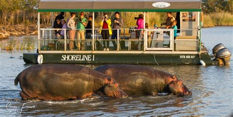 Boat Cruise South Africa by Hippo Croc Boat Cruise St Lucia South Africa