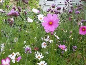 Gartenarbeit Im August : gartenarbeit im august aussaatkalender tomaten haltbar ~ Lizthompson.info Haus und Dekorationen
