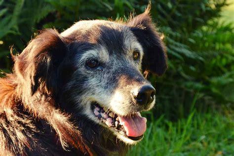 diagnose arthrose beim hund und jetzt urbandog