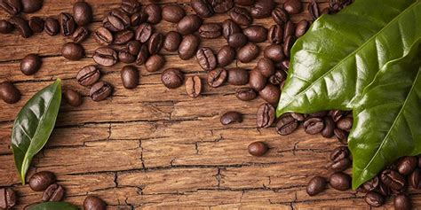 10 Little Known Facts About Arabica Coffee
