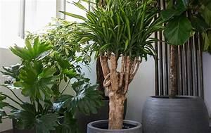 Plante Pour Appartement : orchid es schilliger ~ Zukunftsfamilie.com Idées de Décoration