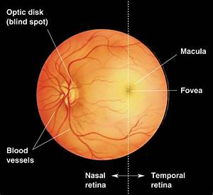 Vision  The Eye