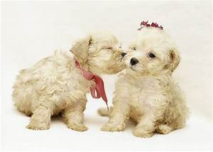 The 30 Super Cute Poodle Puppies - The Wondrous