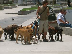 56 best images about dog walkers on pinterest leighton for Dog walker needed