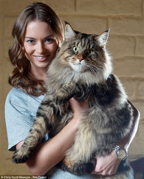 largest house cat cat rupert weighs in at 20lb and he is set to keep