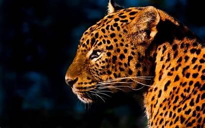 Leopard Desktop Wallpapers Latoro Select Save Right