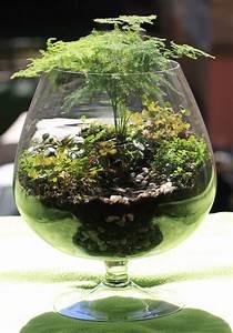 Pflanzen Terrarium Einrichten : florarium terrarium grow little garden akvareel mini gardens pinterest pflanzen ~ Watch28wear.com Haus und Dekorationen