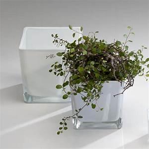 Orchideen übertopf Glas : w rfel blumentopf bertopf blumen bertopf glas wei white emotion 14 cm ebay ~ Eleganceandgraceweddings.com Haus und Dekorationen