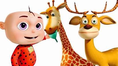 Cartoon Zoo Babies Animation Children Five Went