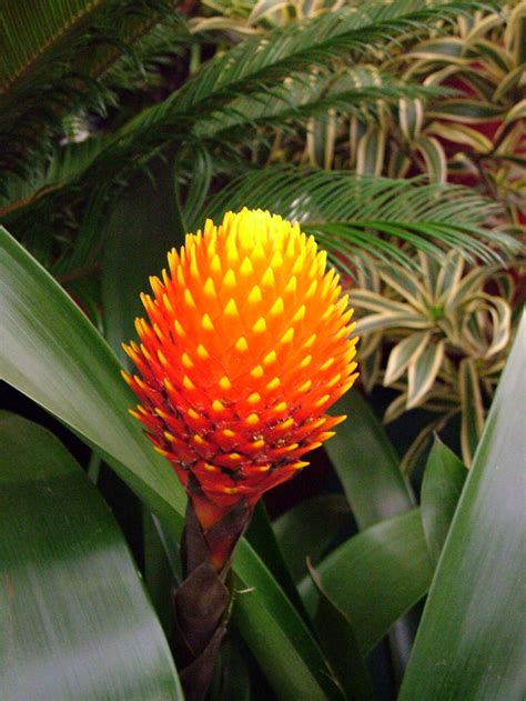 images of tropical plants tropical and carnivorous plants