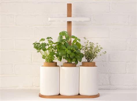 faire pousser d la en interieur lilo le pack pour faire pousser facilement des herbes aromatiques dans votre int 233 rieur niko