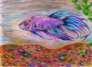 Betta fish drawing | betta fish | Pinterest | Drawings ...