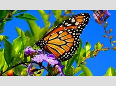 Summer Butterfly Walk Miami Today