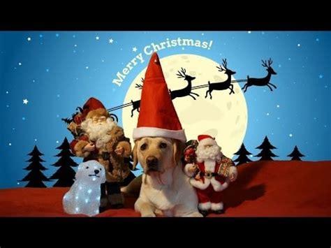 labrador merry christmas youtube