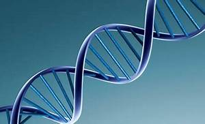 Scientists Finally Present Evidence on Expanding DNA Strands