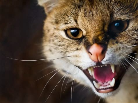 cat dangerous bites thought than previously google