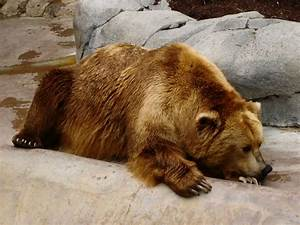 Extremely Sad & Depressed Animals   Funny And Cute Animals