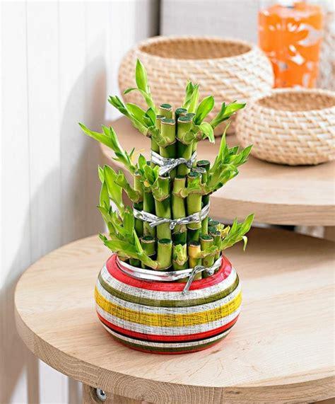 temperature chambre de pousse chance salle de plante de bambou idées de décoration chambre