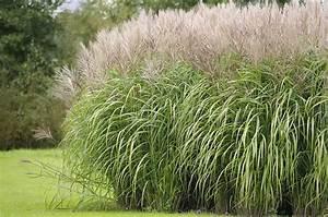 12 Best Ornamental Grasses for Landscaping