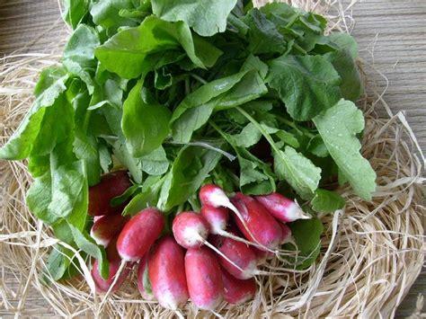 cuisiner feuilles de radis soupe de fanes de radis la cuisine de quat 39 sous