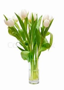 Tulpen In Vase : sch ne wei e tulpen in vase stockfoto colourbox ~ Orissabook.com Haus und Dekorationen