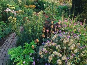 Cottage garden plants hgtv for Garden plant design