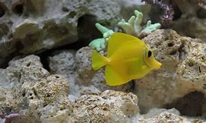 Fische Aquarium Hamburg : masanneck bilder news infos aus dem web ~ Lizthompson.info Haus und Dekorationen