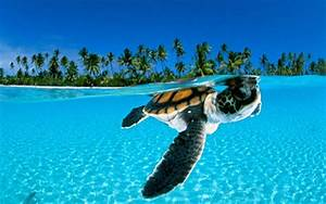 real cute baby sea turtle Quotes