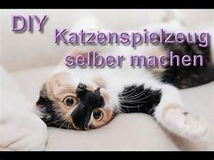 Selber Videos Machen : katzenspielzeug selber machen katzenspielzeuge selbst basteln diy aus haushaltsartikel bauen ~ Watch28wear.com Haus und Dekorationen