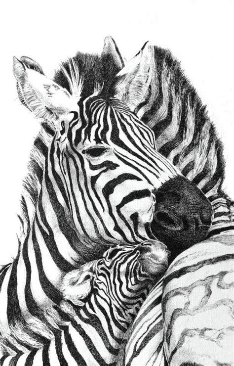 zebras   ink drawing    cm  claude lagny