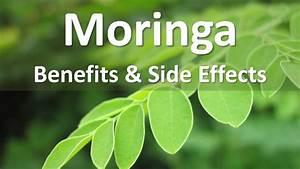 Moringa Oleifera Benefits And Side Effects