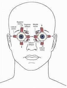 The Cranial Nerves  Organization Of The Central Nervous