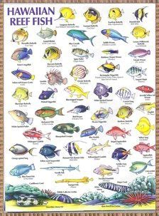 hawaiian reef fish chart fish chart hawaiian names