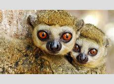 Los animales de Madagascar llegaron a la isla en troncos