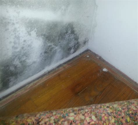 how to get rid of mold in bedroom closet