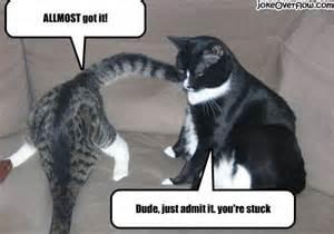 cat jokes almost got it joke overflow joke archive